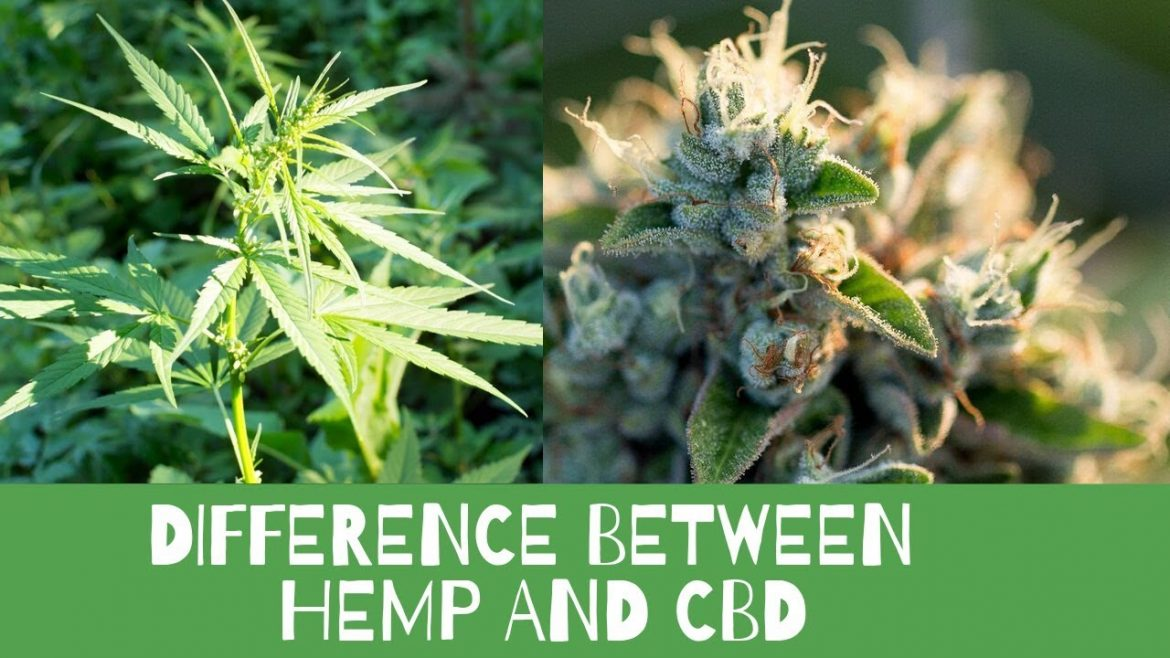 What's the Difference Between CBD and Hemp?