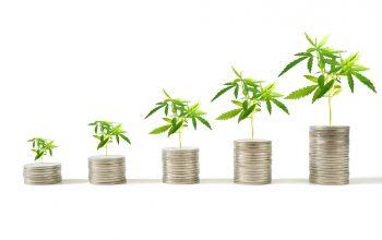 Buying Cannabis